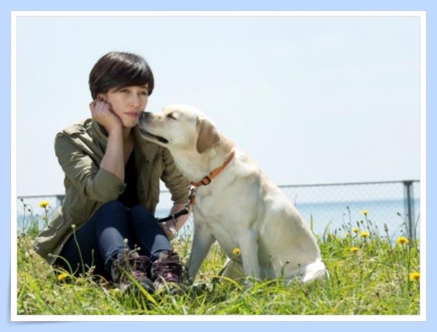 【画像】滝川クリステルのラブラドールは結婚も呼ぶ幸せの保護犬?